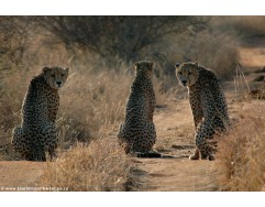 3 days - 2 nights Pilanesberg National Park and Sun City tour